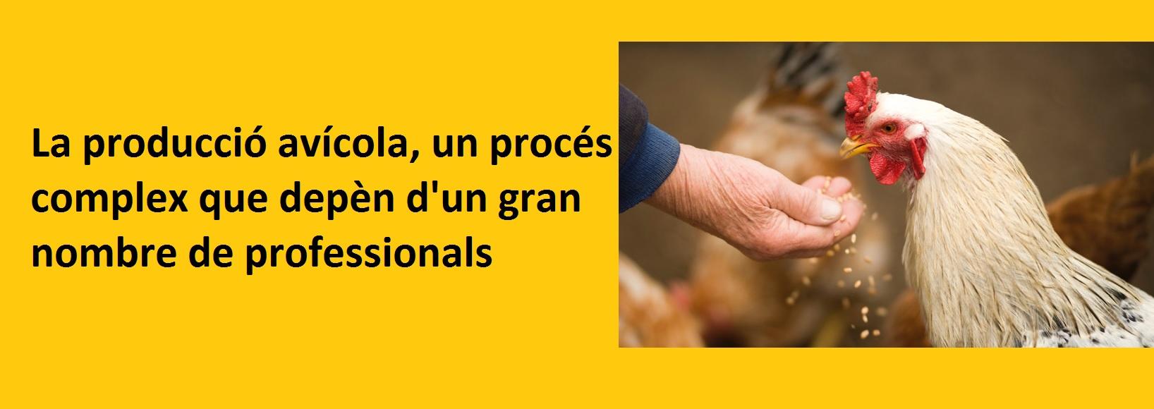La producció avícola